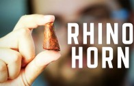 3D Printing Rhino Horns Can Stop Poaching in Africa