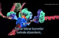 DNA Kendini Nasıl Kopyalıyor – How DNA Copies Itself
