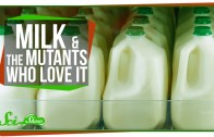 Extreme Animal Milks You Probably Don't Want To Drink