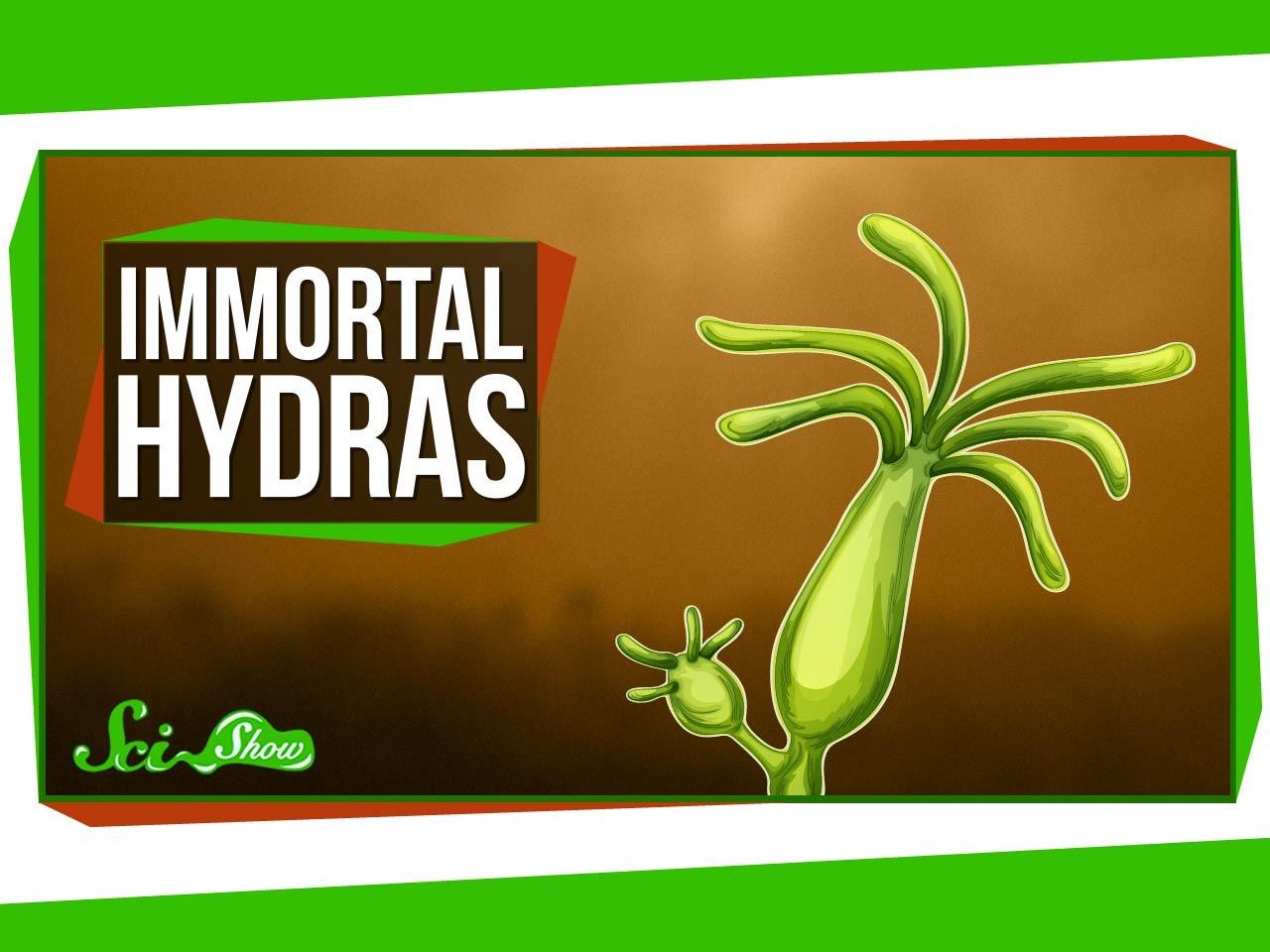 ru onion hydra