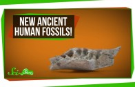 New Ancient Human Fossils!