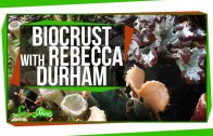 SciShow Talk Show: Biocrust with Rebecca Durham