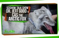 SciShow Talk Show: Dr. Jeff Good & Cas the Arctic Fox