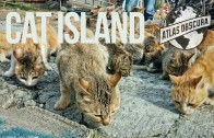 The Cat Islands of Japan | 100 Wonders | Atlas Obscura