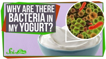Why Are There Bacteria In My Yogurt?