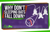 Why Don't Sleeping Bats Fall Down?