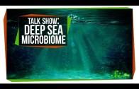 Deep Sea Microbiome: SciShow Talk Show