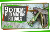 9 Extreme Bug Mating Rituals