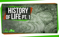 A Brief History of Life: When Life Exploded
