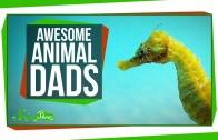 Awesome Animal Dads