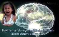 Beyin Gücü – Nöronlardan Ağlara