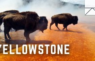 Exploring The Wild Side Of Yellowstone