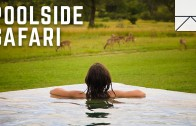 Go On An African Safari Without Leaving The Pool