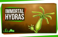 Hydras: Our Immortal, Tentacled Friends
