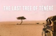 Last Tree of Ténéré | 100 Wonders | Atlas Obscura
