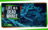 Life Inside a Dead Whale