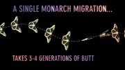 Monarch Migration | Invisible Worlds | Atlas Obscura