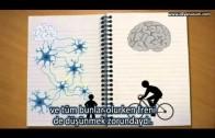 Öğrenen Beyin – The Learning Brain