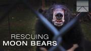 Rescuing Imprisoned Moon Bears in Vietnam