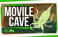 Weird Places: Movile Cave