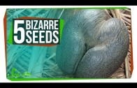 5 of the World's Most Bizarre Seeds