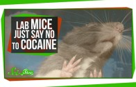 Mice That Resist Cocaine Addiction